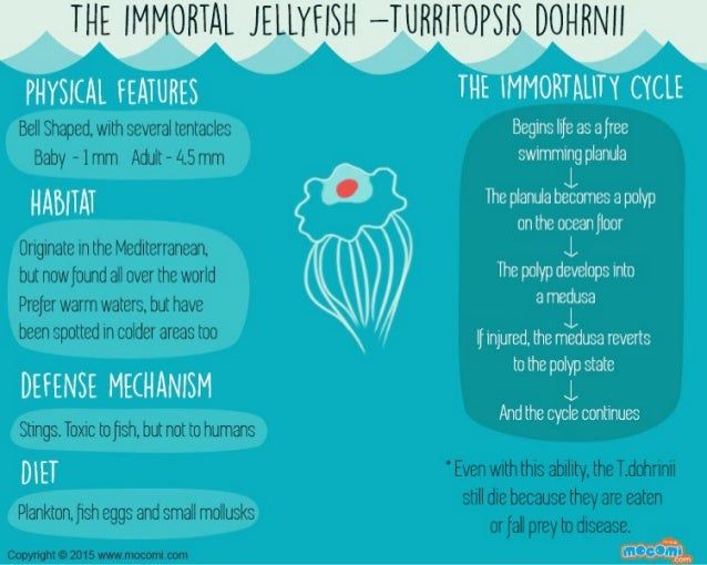 Immortal Jellyfish Facts – Mocomi Kids