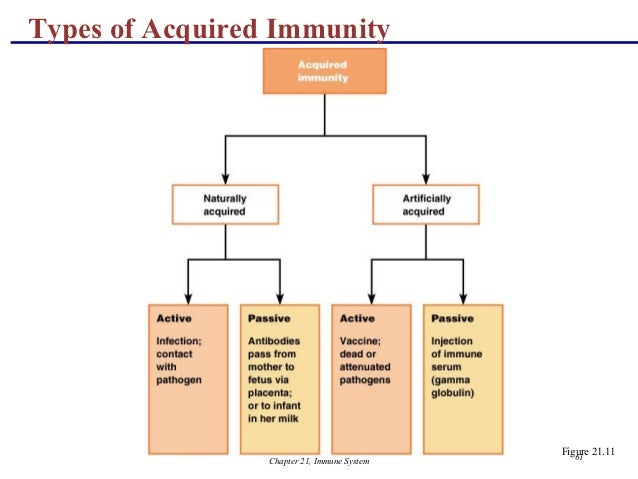 an analysis of the immune system cell types for the protection of the body Awareness of the complexity of the immune system and its determinants   vaccines protect by inducing effector mechanisms (cells or molecules) capable of   the nature of the vaccine exerts a direct influence on the type of immune  effectors that  memory t cells patrol through the body to detect specific  microbial peptides.