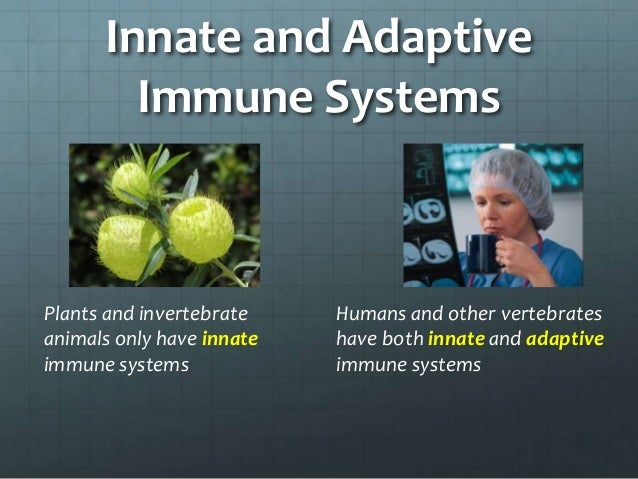 plants immune systems Why is immune system so important it is essential to strengthen the defenses in people who often have chronic infectious processes people in good health should also.