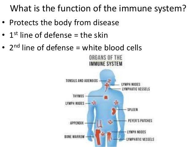 immune system, Human body