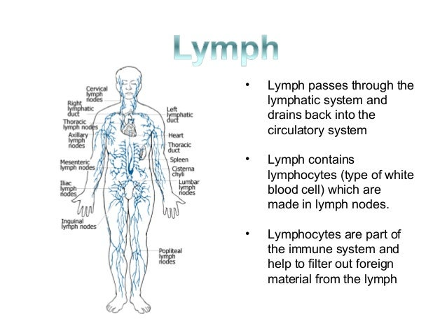 Immune Lymphatic And Endocrine System
