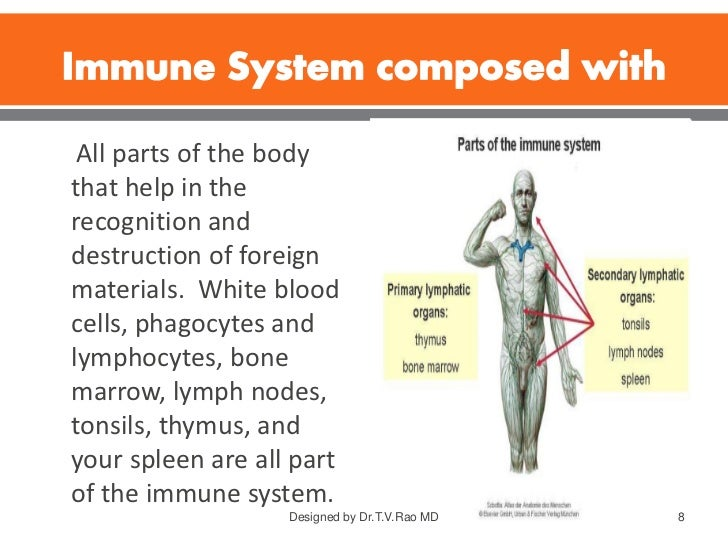 Immune System Structure And Functions