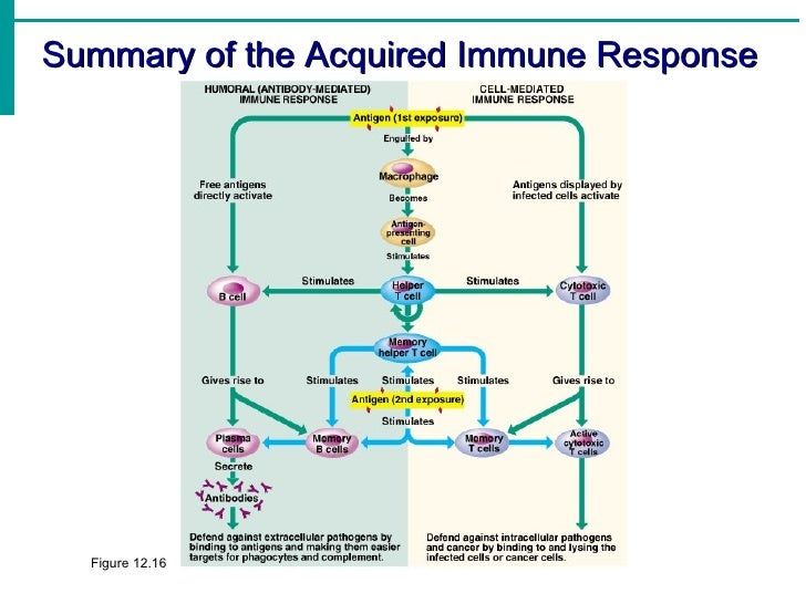 The complement system in microorganisms