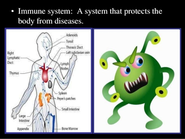 Immune System, HIV, AIDS, and STD's PowerPoint Review Game, Quiz