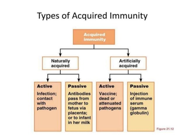 Image result for adaptive immunity active passive