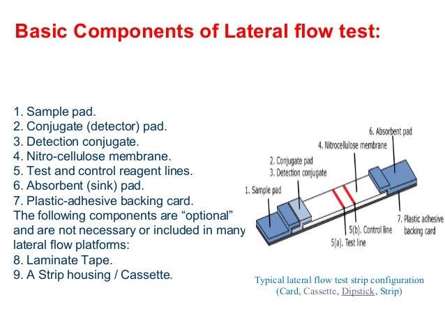 Introduction to Lateral Flow Rapid Test Diagnostics