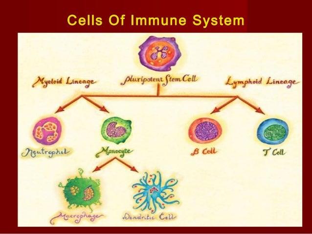 "Types of ImmunityTypes of Immunity  Innate immunityInnate immunity – """"Innate"" because shared by all animalsInnate"" becau..."