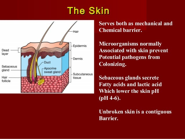 Mucosal membranesMucosal membranes Mucosal membrane consist of epithelial layerand under lying connective tissue layer. Mm...
