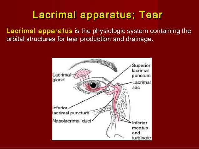 Lacrimal apparatusLacrimal apparatus Tear mechanically remove the foreign partical and also contains, Lysozyme which const...