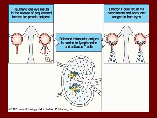 Properties of AntigenProperties of Antigen 8. Valency The combining capacity of an antigen with specific antigen binding s...