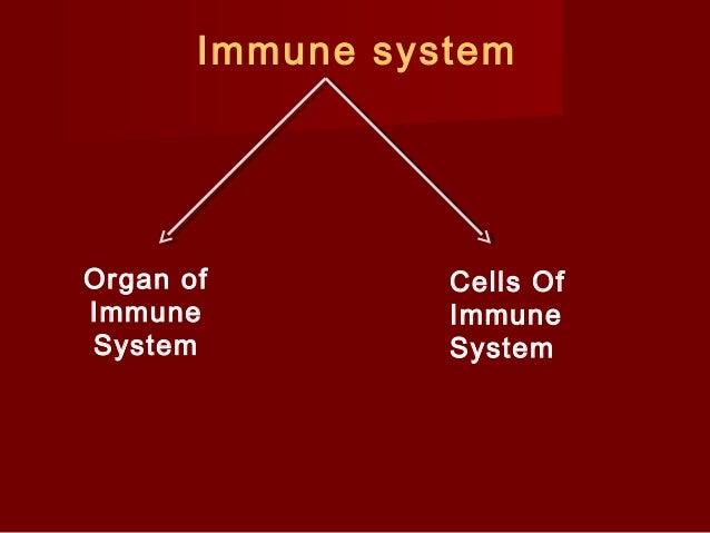 V Organ of Immune System