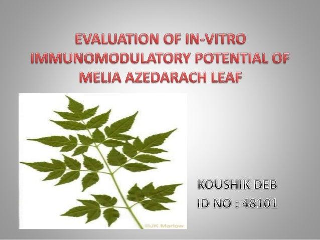 Introduction to medicinal plants. Medicinal plant Melia azedarach L. Immunomodulation and immunomodulators In- vitro &...