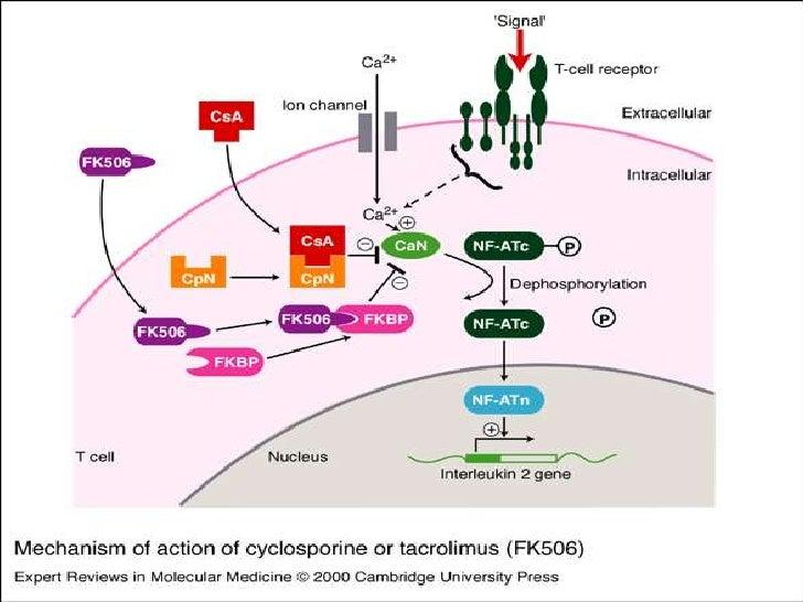 immunosuppressive drugs
