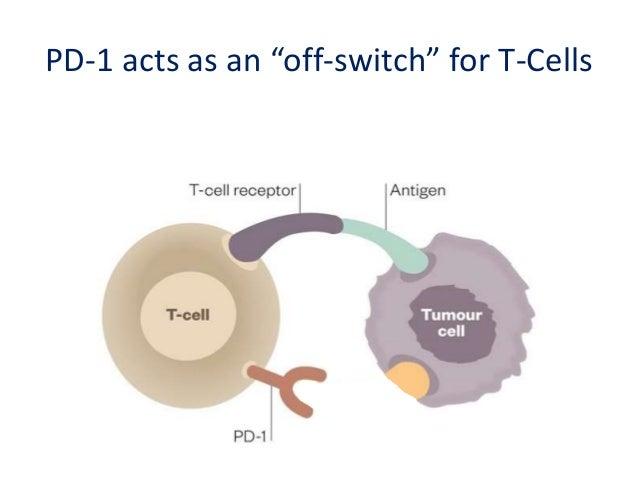 PD-1/PD-L1 inactivates T-Cells
