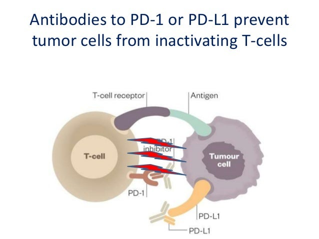 Antibodies to PD-1 shrinks cancers in the majority of patients with metastatic melanoma