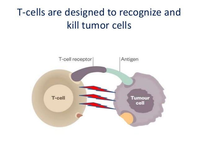 """PD-1 acts as an """"off-switch"""" for T-Cells"""