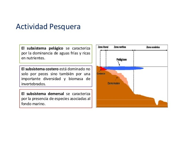 Impacto ambiental en la actividad pesquera Slide 3