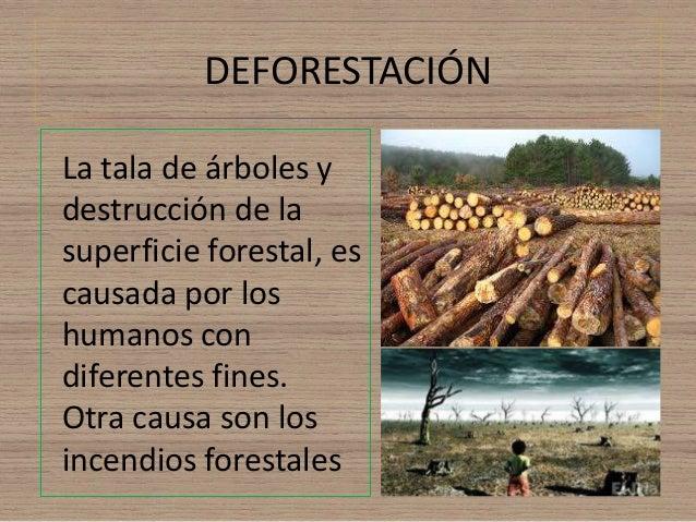DEFORESTACIÓN  La tala de árboles y  destrucción de la  superficie forestal, es  causada por los  humanos con  diferentes ...