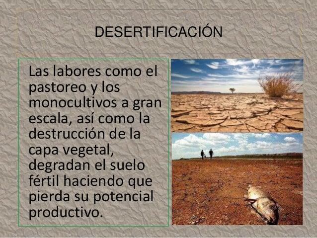 DESERTIFICACIÓN  Las labores como el  pastoreo y los  monocultivos a gran  escala, así como la  destrucción de la  capa ve...
