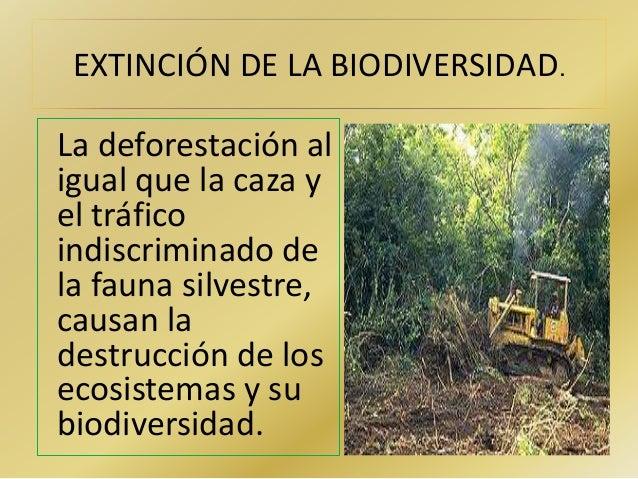 EXTINCIÓN DE LA BIODIVERSIDAD.  La deforestación al  igual que la caza y  el tráfico  indiscriminado de  la fauna silvestr...