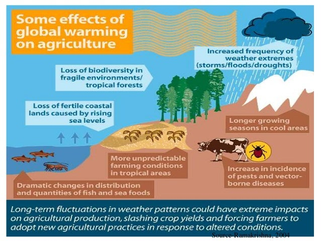 the impact of agricultural sector on Globalization and agriculture: new realities  most of the private sector technology transfer and r&d activity has focused on us and western europe in the past.