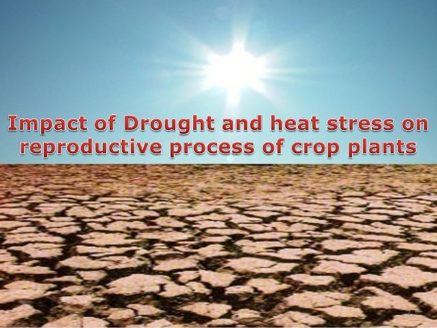 Impact of drought and heat stress on reproductive process ...