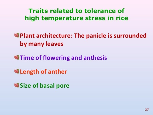 anthesis in rice