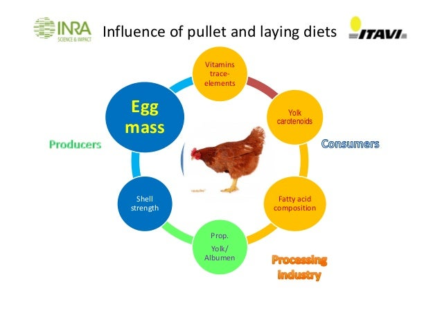 Impact Of Laying Hen Nutrition On Egg Quality Nys Y