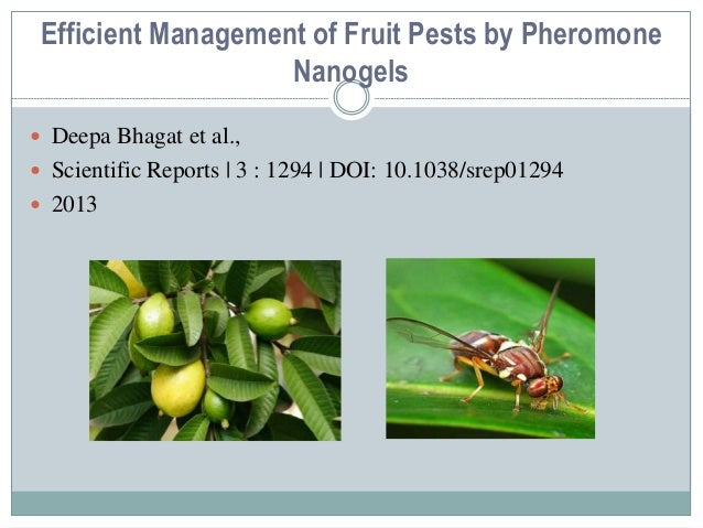 the effect of pest infestation in Effects of planting pattern on major date palm of planting pattern factors had significantly effect on date pests and diseases injury and they was used for estimating of pest infestation 15 trees were selected randomly in each orchard then percent of infestation was evaluated based on.