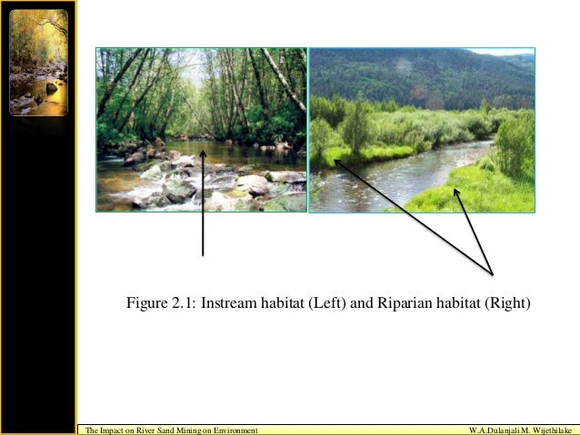 impact on environment by mining essay Essay on the impact of human essay on the impact of human activities on environment the commercial and industrial activities associated with mining.