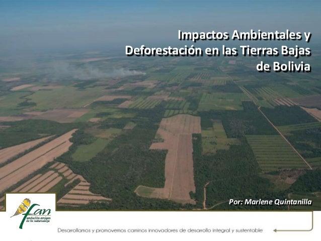 Impactos Ambientales y Deforestación en las Tierras Bajas de Bolivia Por: Marlene Quintanilla