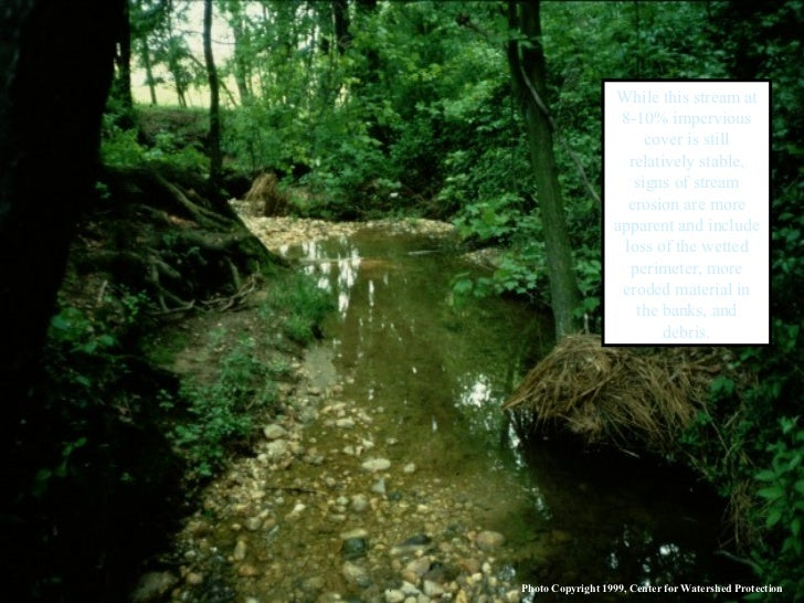 While this stream at 8-10% impervious cover is still relatively stable, signs of stream erosion are more apparent and incl...