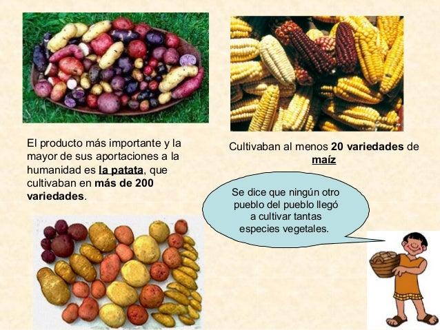 Imperio inca for Terrazas 14 vicuna