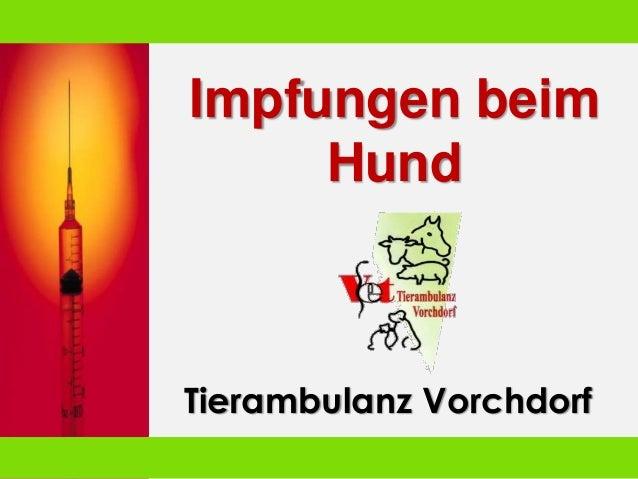 Impfungen beim Hund Tierambulanz Vorchdorf