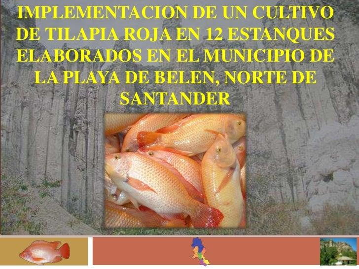 cria de mojarras en estanques implementacion de un cultivo de tilapia roja en 12