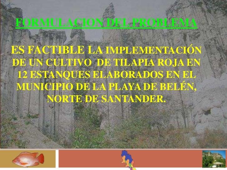 Implementacion de un cultivo de tilapia roja en 12 for Piscicultura tilapia roja