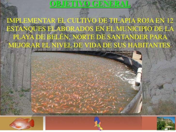 Implementacion de un cultivo de tilapia roja en 12 for Construccion de estanques para tilapia