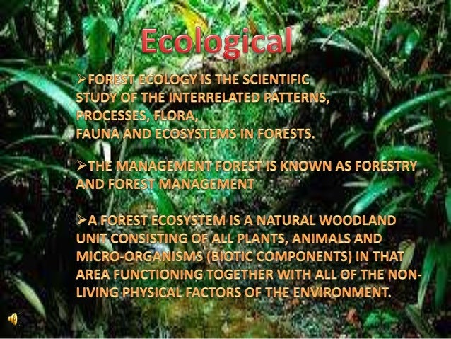 the important of forest Forests have always had great importance to people prehistoric people got their food mainly by hunting and by gathering wild plants many of these people lived in the forest and were a natural part of it.