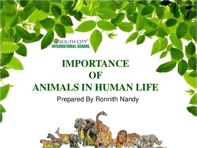 importance of animals in human life essay