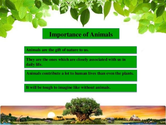 importance of plants and animals in our life Importance of wildlife the wildlife comprises all living organism (plants, animals, microorganisms) in  our wild life title.