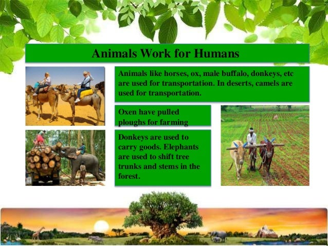 the importance of work to the development of human beings Human resource management and its importance for today supply of the human being to main and disadvantages of a competitive work.