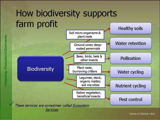 future of ecotourism essays
