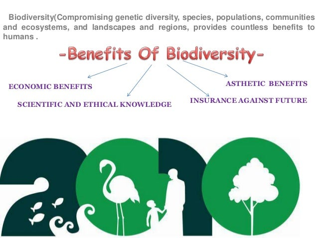 the importance of biodiversity and effects environmental sciences essay These ecological effects of biodiversity in turn are affected it is important to define some terms biodiversity is not heterogeneity of the environment.