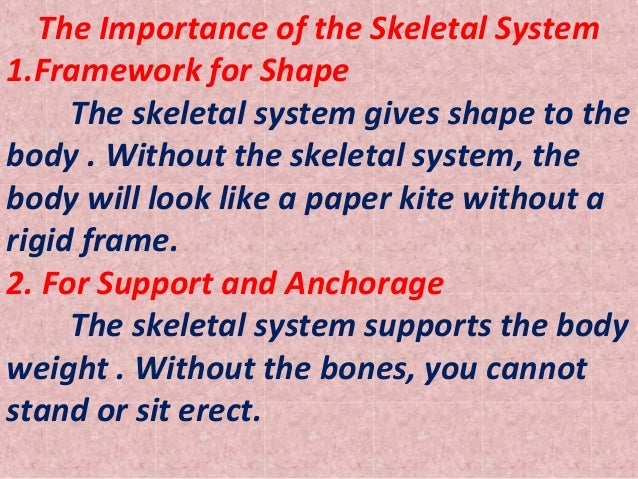 importance of the skeletal system the importance of the skeletal system 1 framework for shape the skeletal system gives shape