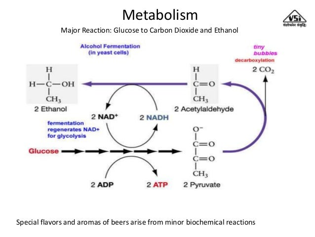 lab cellular respiration in yeast -determine which sugars yeast is capable of metabolizing most efficiently -measure co2 levels (a product of cellular respiration and alcoholic fermentation) to determine rates of sugar consumed by yeast.