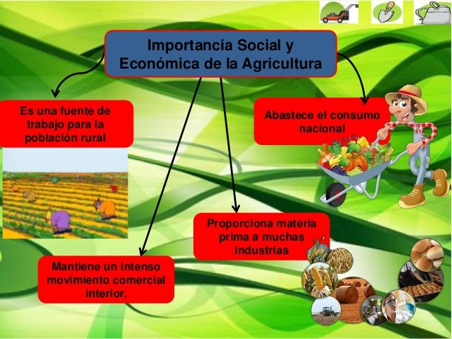 Imagenes De La Agricultura Importancia De Agricultura
