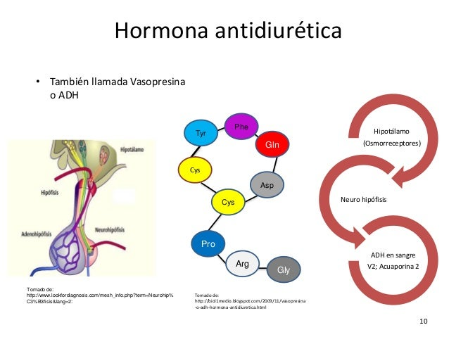 Image result for hormona antidiurética