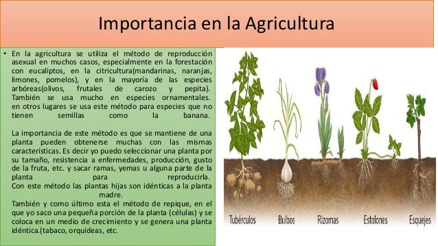 Importancia de la reproducci n en las plantas for Importancia de las plantas ornamentales