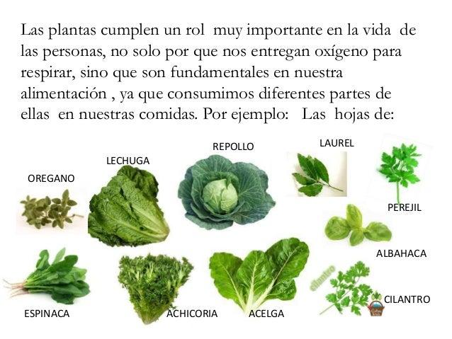 Importancia de las plantas for Que son plantas ornamentales ejemplos