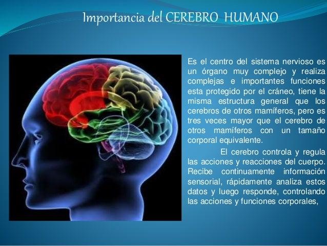 importancia-del-cerebro-humano-1-638.jpg?cb=1449282737